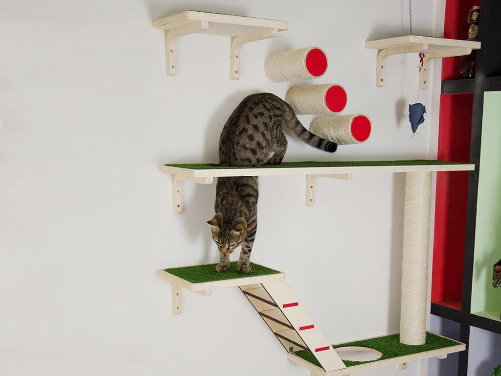 realizzazione gioco gatto