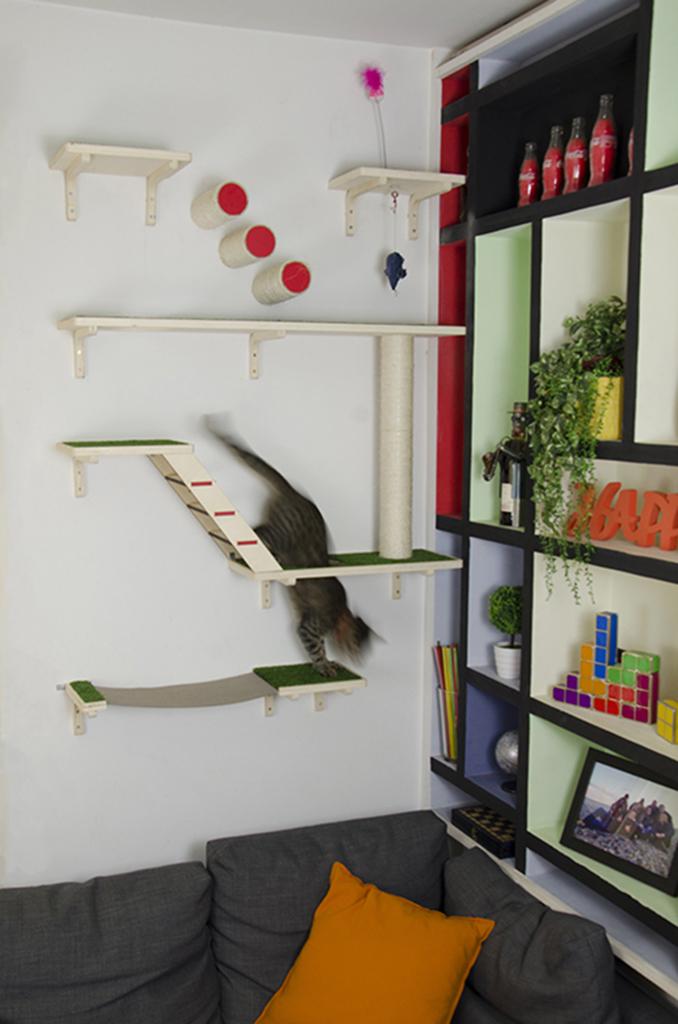 Realizzazione gioco per gatti